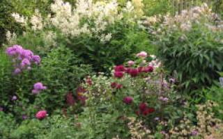 Гармония и контрасты Английского сада